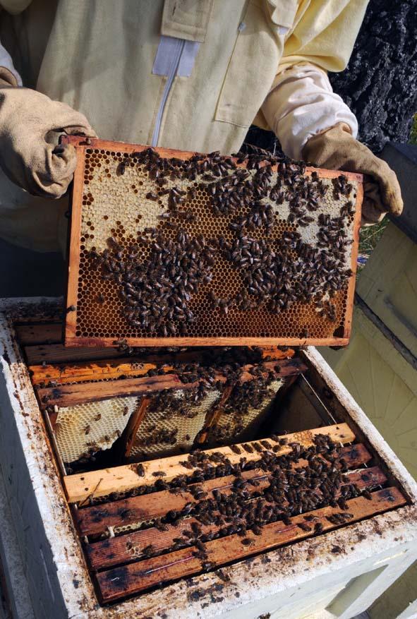 Delvis täckt honungsram.