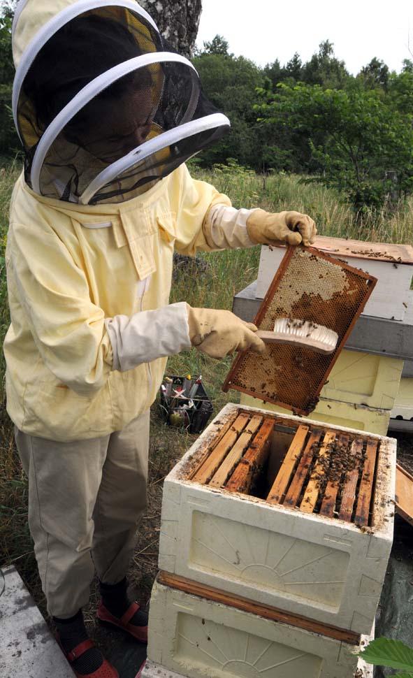 En borste är bra att sopa bort bin med.