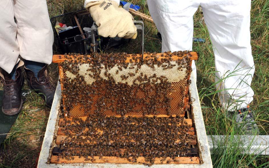 Täckt honung och en massa bin.